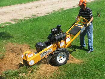 Can I Rent A Stump Grinder To Remove Stumps?