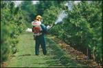 Stihl Backpack Sprayer Rental